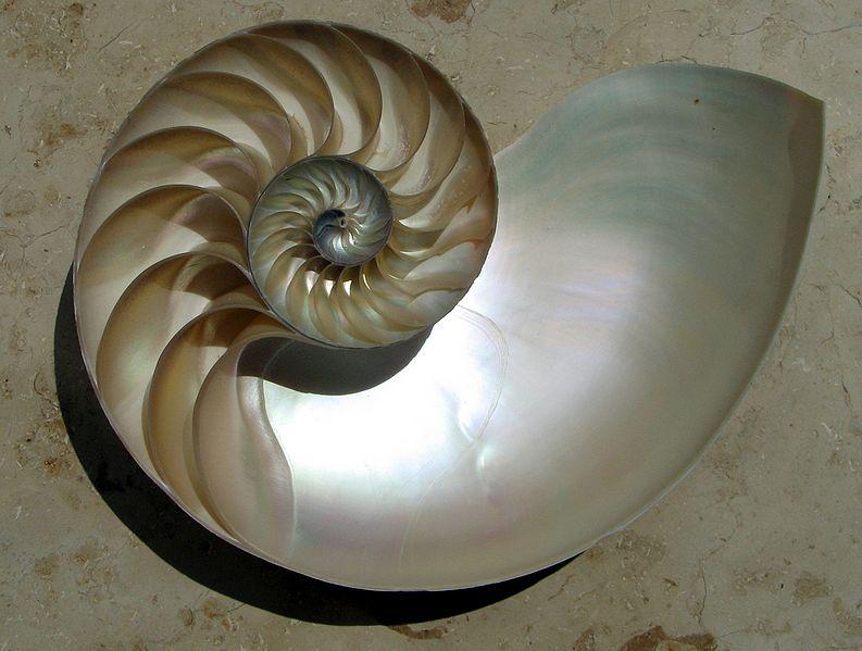coquille mollusque