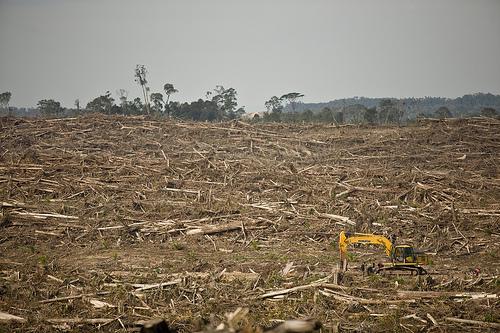 Les ravages de l'huile de palme sur la forêt tropicale