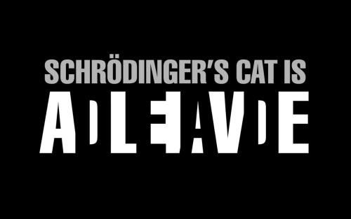 Chat de Schrödinger