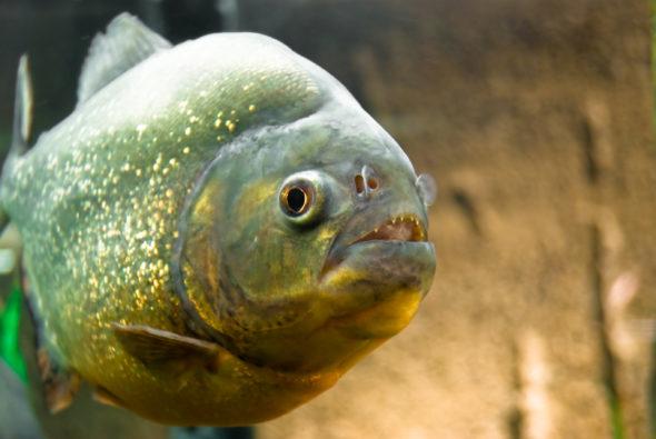 site de rencontres appelé quelque chose de poisson
