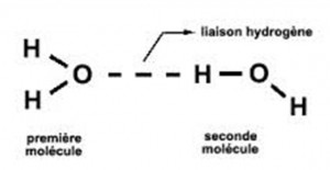 Figure 17 - La lisaison hydrogène