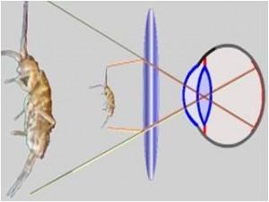 Figure 2 - Principe de la loupe