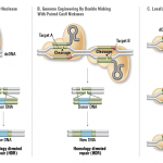 ps223_FA_Cas9_Fig2_Cas9forGenomeEditing.png